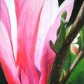 N2, Magnolie, 60x90 cm, 250 Euro